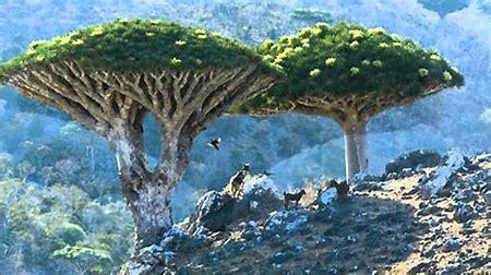 توجيهات بتشديد الرقابة لمنع دخول أي نباتات دخيلة على بيئة أرخبيل سقطرى